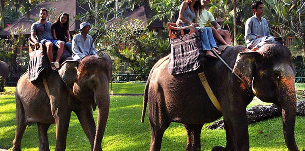 naik gajah